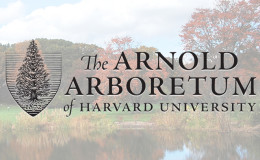 Arnold Lecture with trees