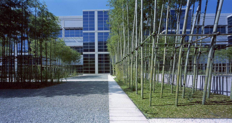 Bamboo Garden Lg Headquarters Mikyoung Kim Design Landscape